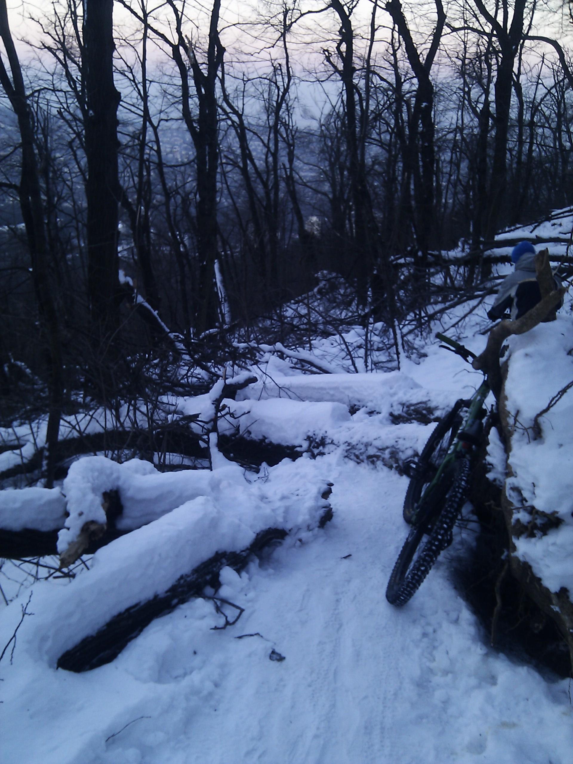 János hegy tél, kidőlt fák