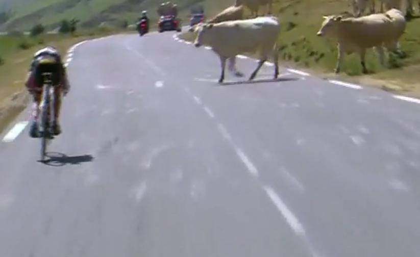 Tour De France 2015 lejtmenet marhak
